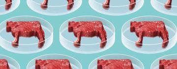На западных рынках появляются искусственно выращенные курятина и мясо