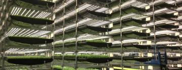 Насколько оправданно увлечение масштабами в сити-фермерстве?