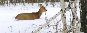 Представляем опыт сибирских специалистов по сохранению популяций диких животных в государственных заказниках