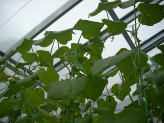 Новосибирские разработчики «умных» органических теплиц выходят на международный рынок
