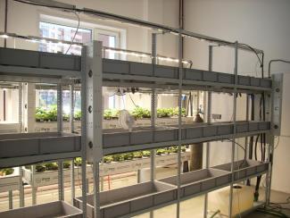 В Академгородке реализуется первый в стране коммерческий проект по созданию вертикальных ферм