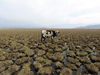 Российские ученые констатируют неоднозначность последствий климатических изменений для нашей страны