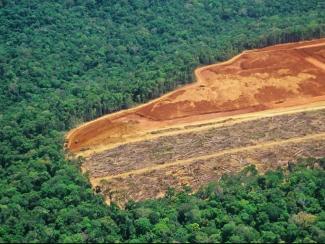Почему тропические леса становятся источниками углеродных выбросов