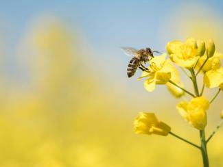 Как пренебрежение сельхозпроизводителей научными рекомендациями создает экологические проблемы