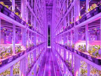 Есть ли будущее у вертикальных сити-ферм? Часть 1: цифры и факты