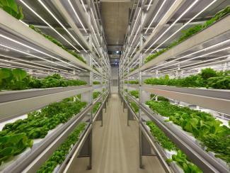 Сити-фермерство как неизбежная реальность ближайшего будущего