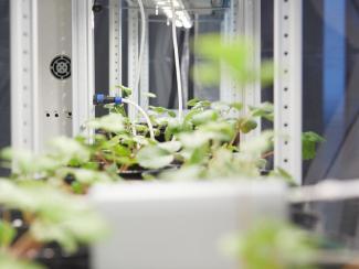 О современных системах выращивания растений с помощью «умной» гидропоники