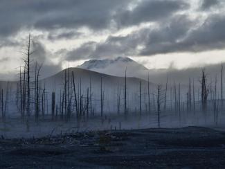Ученые пытаются оценить вклад «призрачных лесов» в глобальное потепление