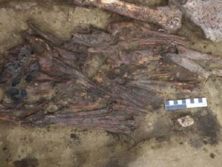 Археологи нашли в Новосибирской области необычный предмет из клювов птиц