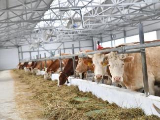 Экоактивисты требуют запрета промышленного животноводства
