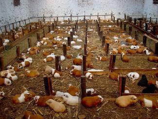 Об альтернативном и актуальном направлении в животноводстве