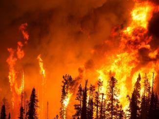 Ученые об естественных причинах лесных пожаров