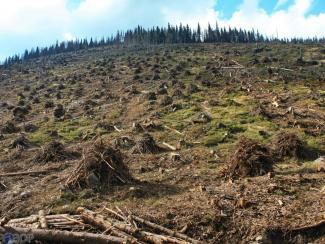 Международная группа ученых связала появлений пандемий с масштабной вырубкой лесов
