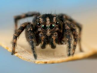 Новосибирская исследовательница описала новый род африканских пауков и подарила ему имя своей мамы