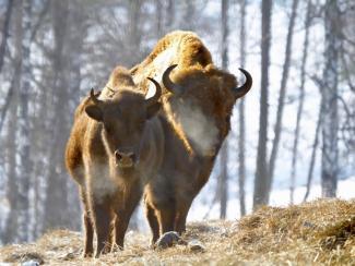 На Алтае хотят создать биосферный кластер по сохранению редких животных