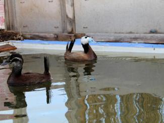 Интервью с руководителем проекта по восстановлению поголовья исчезающих видов птиц Владимиром Шило