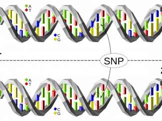 Работа новосибирских генетиков дает более полную картину информации, зашифрованной в ДНК