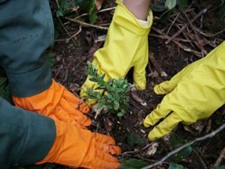 Создан новый метод выявления вредителей растений