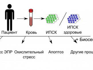 Генетически кодируемые биосенсоры помогут в изучении механизмов развития заболеваний