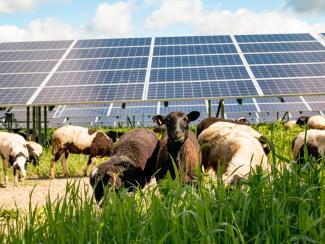 Как солнечные панели могут содействовать продовольственной безопасности