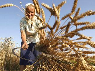 Резонные замечания в пользу самостоятельного выращивания зерновых культур