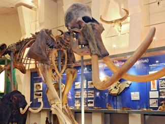 Ученые нашли место для жизни древних животных в случае их возрождения
