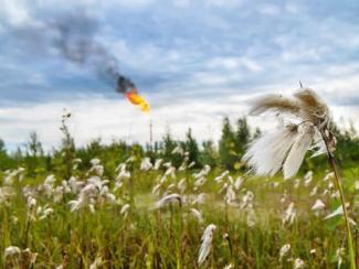 Сибирские селекционеры-овощеводы отмечают тенденцию к потеплению климата