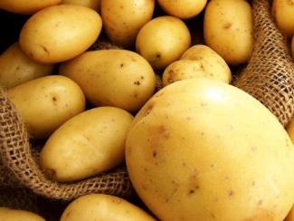 Простые советы от специалистов СибНИИРС для наших огородников, занятых выращиванием картофеля