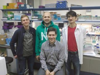 Ученые ФИЦ «Институт цитологии и генетики СО РАН», продолжая работу, посвященную упорядочиванию ДНК в клеточных ядрах, получили интересные результаты