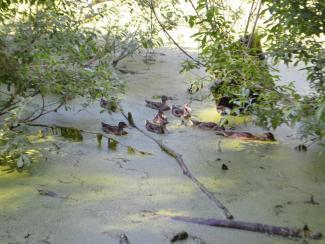 Есть в Академе старый пруд…
