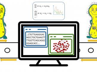 Ученые ИЦиГ работают над библиотекой геномов микроорганизмов