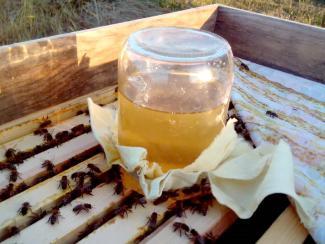 Поддержка популяций насекомых-опылителей должна стать заботой для каждого садовода