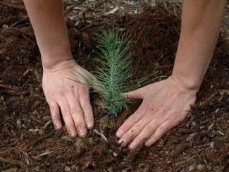 Новосибирский ученый предложил необычный способ утилизации жидких органических отходов