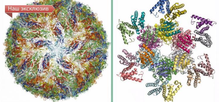 Нобелевская премия по химии досталась разработчикам криоэлектронной микроскопии - комментарий новосибирских ученых