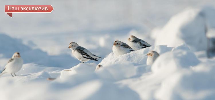 Как в заказнике «Кирзинский» с помощью биотехнии помогают певчим птицам пережить суровую сибирскую зиму