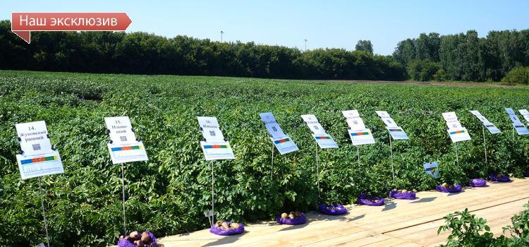 О национальных особенностях продовольственной безопасности в свете новой целевой программы по созданию отечественного семенного фонда